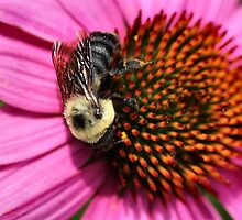 Bumble Bee and Cone Flower by Keala
