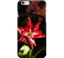 Red Star/Flower - Nature Photography iPhone Case/Skin