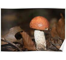 Red Cap Mushroom Poster