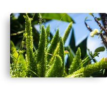 Fluffy Plants - Nature Photography Canvas Print