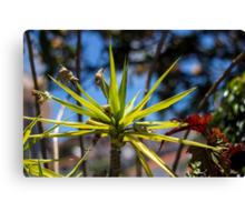 Spike Plant - Nature Photography  Canvas Print