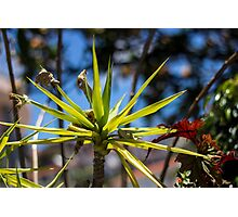 Spike Plant - Nature Photography  Photographic Print