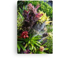 Cosmic Flowers - Nature Photography Canvas Print