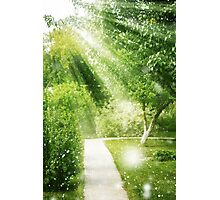 Natural spring background with sun light Photographic Print