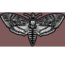 Deaths Head Moth - Silence of the Lambs Photographic Print
