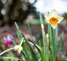 Spring time is here by Melissa Thorburn