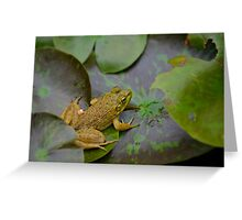 A frog on a leaf in a pond Greeting Card