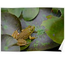 A frog on a leaf in a pond Poster
