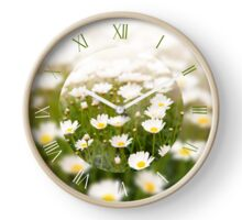 White herb camomiles clumps Clock