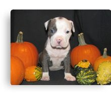 What Is Halloween ?? Canvas Print
