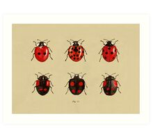 Coccinellidae entomology studies fig. 11 Art Print