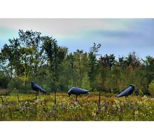 """3 Crows in Field"" -1999-2001 Steel Photographic Print"