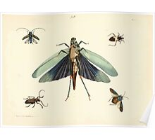 New Illustrations of Zoology Peter Brown 1776 0245 Insects Poster