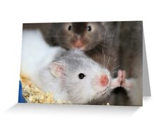 How much is that hamster in the window Greeting Card