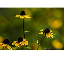 Field of Yellow Wildflowers Photographic Print