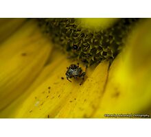 Living in a Sunflower Photographic Print