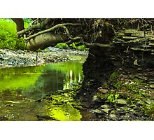 Growing Over the Stream Photographic Print