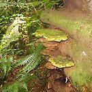 Brackets in the Rainforest G.C.Hinterland by MardiGCalero