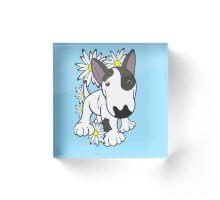 English Bull Terrier Pup Daisies  Acrylic Block