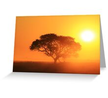 Camel Thorn Tree - African Sunset Tranquility  Greeting Card