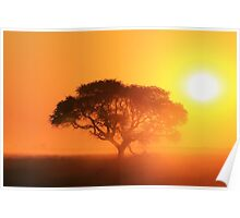 Camel Thorn Tree - African Sunset Tranquility  Poster