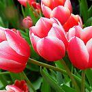 Raindrops On The Tulips by WildestArt