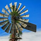 Windmill Weeds - Boonah Qld Australia by Beth  Wode