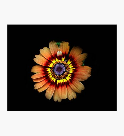 Tiedye Sunflower Photographic Print