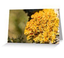 Fruticose Lichen Greeting Card