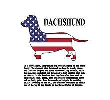 Dachshund Photographic Print