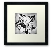 Spring Daffodil - Ink drawing Framed Print