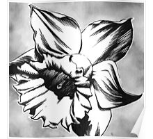 Spring Daffodil - Ink drawing Poster