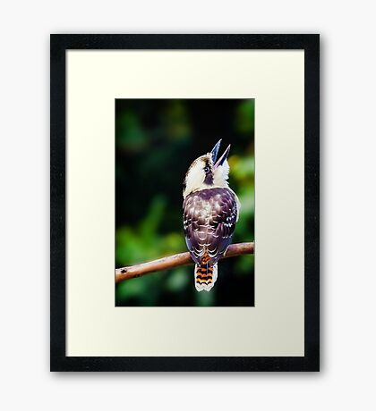 Things are looking up.... Framed Print