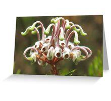 Grey Spider Flower (Grevillea buxifolia) Greeting Card