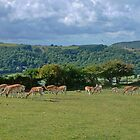 Herd of Fallow Deer by AnnDixon