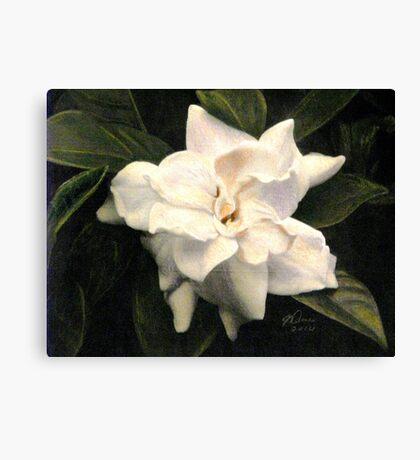 The Scent of Gardenia Canvas Print