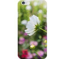 Cosmos in the garden iPhone Case/Skin