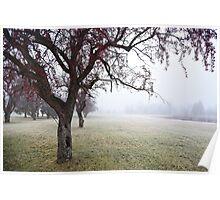 November Cherry Blossoms  Poster