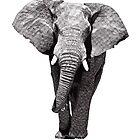 African Elephant 2 by RikReimert