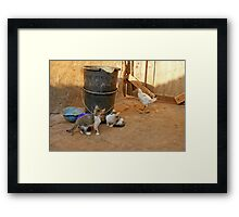Cats and Chicken Framed Print