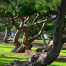 Leaning Trees by Heather Friedman