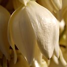 Yucca Bell by kalaryder