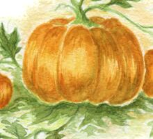 Three pumpkins Sticker