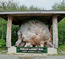 Worlds Largest Burl by AnnDixon