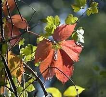 Signs Of Autumn by LynyrdSky