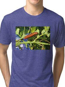 Gulf Fritillary Caterpillar Tri-blend T-Shirt