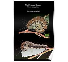 The Fingered Dagger Moth Caterpillar Poster