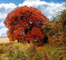 Beautiful Autumn Colours by hootonles