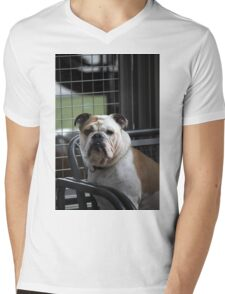 mastiff dog Mens V-Neck T-Shirt