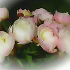 Peonies  by OlaG